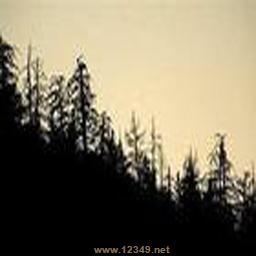 死亡森林v0.3正式版(附隐藏技能密码)