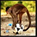 猴子抢球V1.01